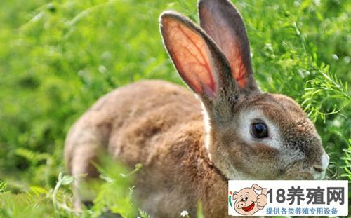 2020养殖兔子要投资多少钱?