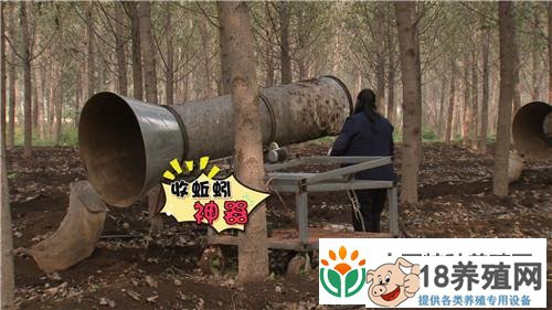 赵长新养蚯蚓有高招一亩收益4万元 粪里筛出500万(4)