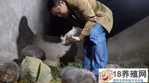 蒲骏被赶出家门深山养竹鼠实现财富逆袭(2)