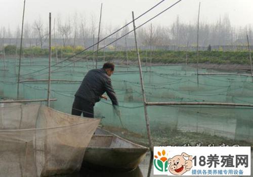 网箱养殖甲鱼管理技术