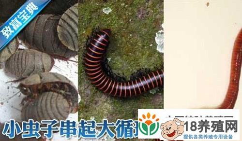 土元、马陆和蚯蚓立体循环养殖技术