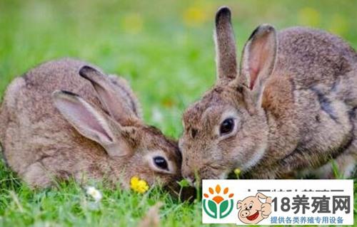 现在市场上的兔子价格大概多少钱一斤?