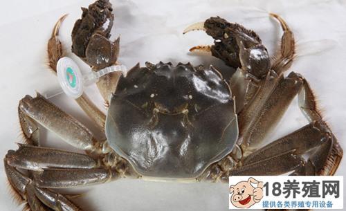 死了的大闸蟹多久不能吃呢?