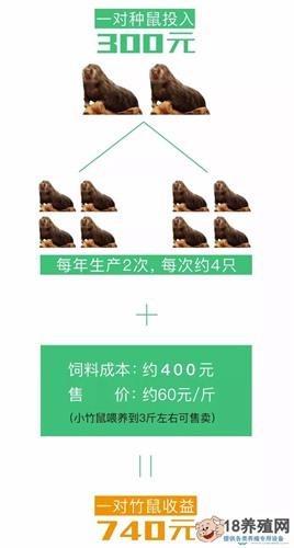 竹鼠的养殖收益、成本,市场前景分析