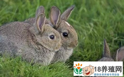 现在养兔子赚钱吗?为什么那么多人都赔钱了
