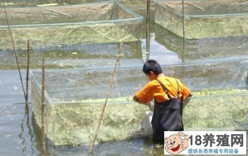 网箱养殖黄鳝的方法