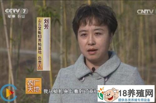 山东淄博刘芳养蚯蚓生产蚯蚓粪带来千万财富