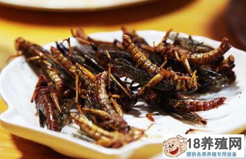 蚂蚱蛋白质在食品及药品中的应用(2)