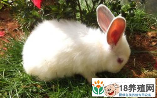 野兔养殖的兔舍环境要求有哪些