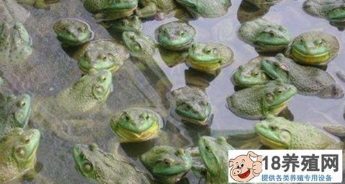 牛蛙养殖有什么污染?