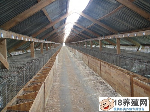 水貂养殖条件和棚舍建造(2)