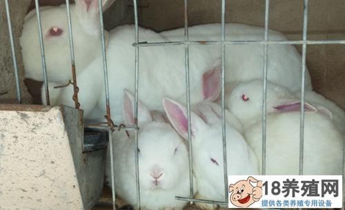养殖兔子容易吗?养殖100只兔子利润有多少 呢?