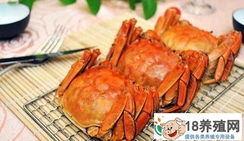 大闸蟹季节几月到几月才有?