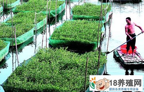 望江:黄鳝的网箱养殖及水稻种植技术