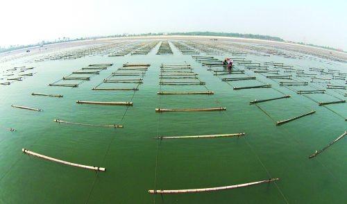 山东青岛莱西:水产养殖该进入旺季了