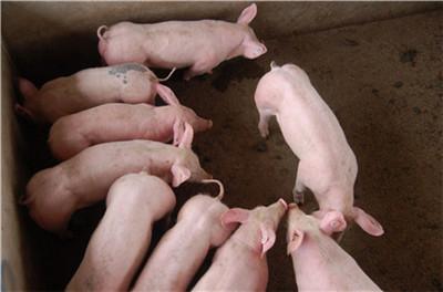 南方有少量生猪的农场积极补充供应