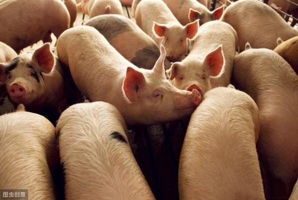 今年生猪生产目标能实现吗?