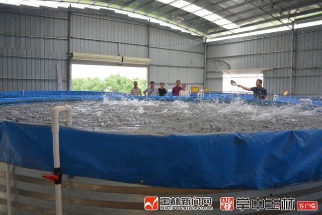 广西玉林市富民:一个陆基圆形池塘可以养5万条鱼