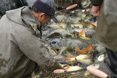"""胡大股份与""""鱼院士""""联手帮助湖南实现1000亿元的水产品产业目标"""