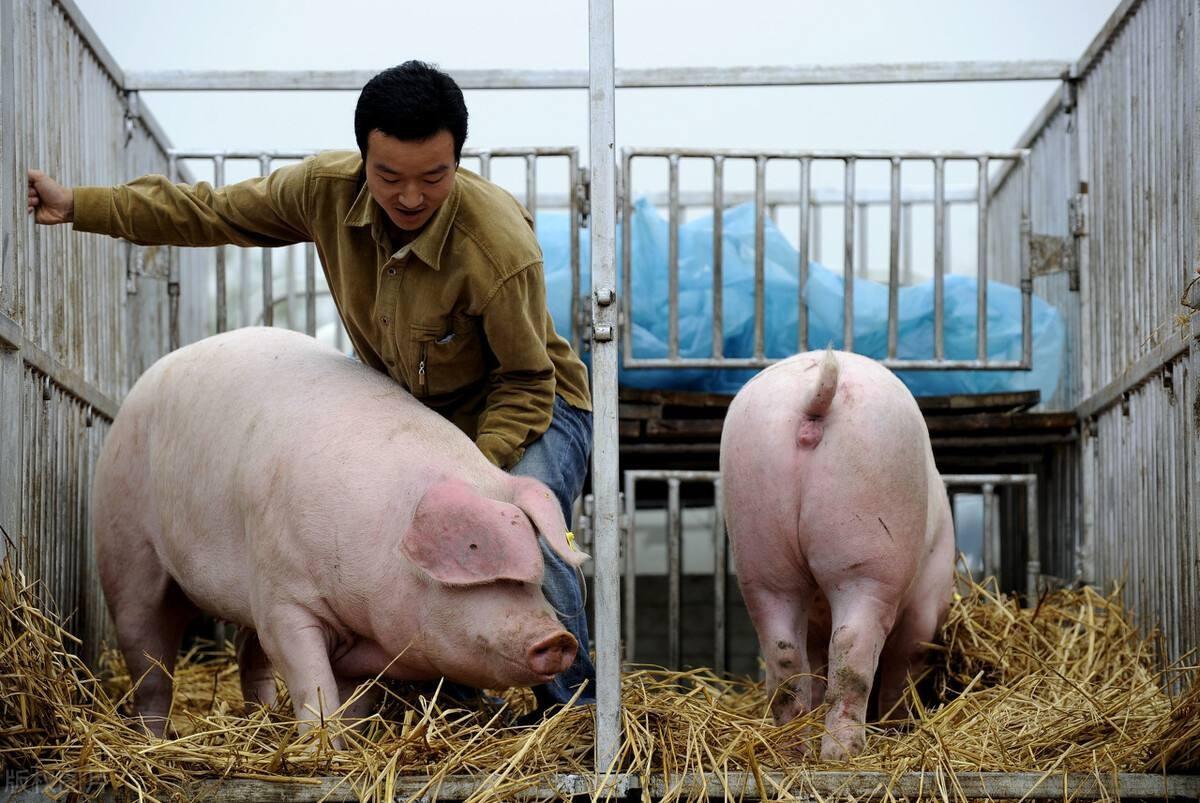 山西:目前部分地区生猪价格已经跌破成本线