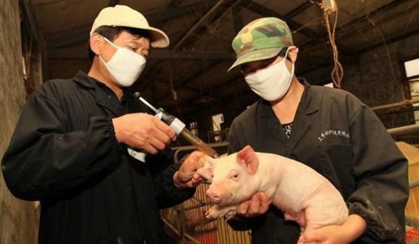 本文对仔猪的日常保健策略进行了非常全面的阐述