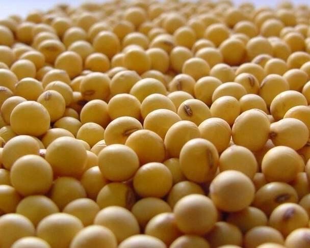 2021年3月10日大豆和豆粕早盘分析总结