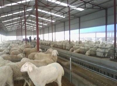 共享养羊技术:夏季养羊保健要点