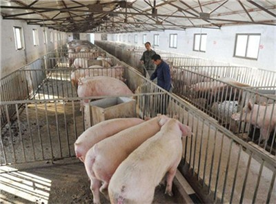 波兰:首次报告非鼠疫病例,非洲猪瘟进入养猪密集区!