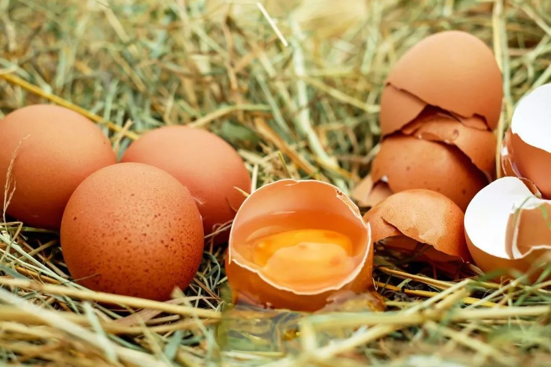 蛋类成长的力量