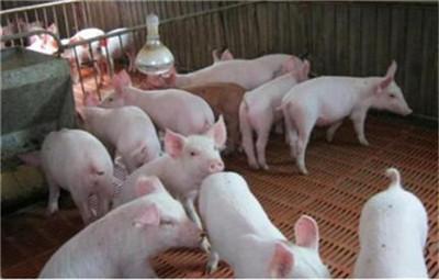 生猪价格北跌南涨,市场约束明显
