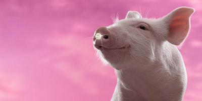如何规范养猪场的使用?