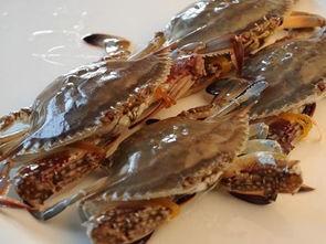 如何养梭子蟹?放养时间、投饵和收获管理