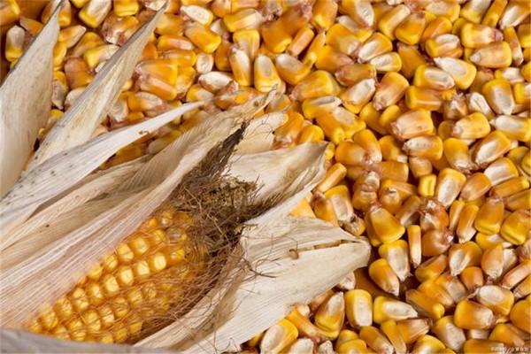 """玉米价格修正:分析四个""""盈利空""""因素,两个方面的价格""""支撑"""""""