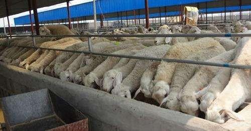 2019年,全国羊肉产量为488万吨