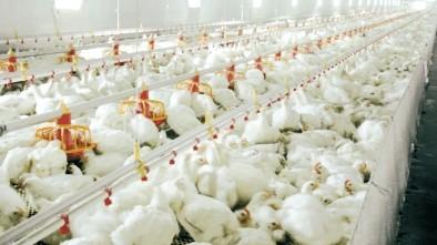 5月7日,CFT鸡评蛋肉鸡节后缺乏良好滞胀。鸡肉和鸡苗价格持续上涨
