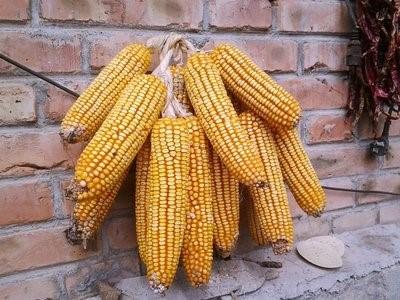 玉米市场能否在4月份进一步探底,价格回温?
