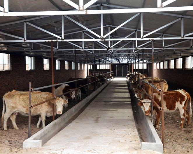 玉溪新平有望成为养殖百万头猪的大县