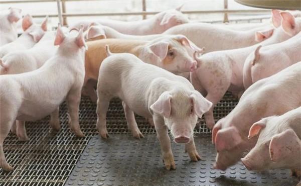 非洲猪瘟在一些亚洲国家的最新情况