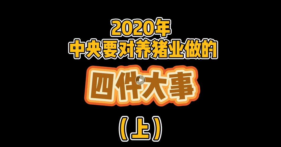 《鸡西观察》专栏:2020年中央政府对养猪业要做的四件大事(一)