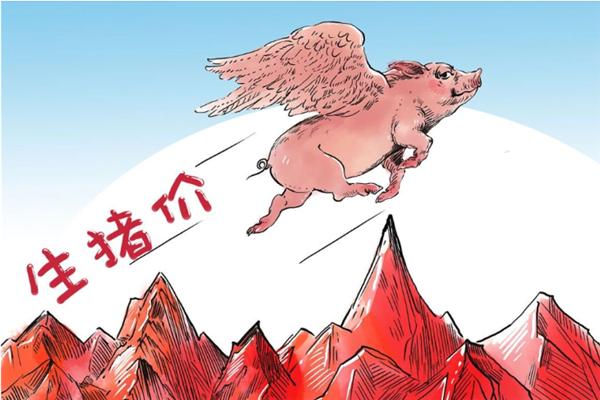 很多地方的猪价已经不跌了,月底猪价还会涨报复?三个坏消息!