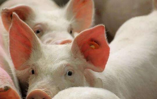 农业农村部:推进生猪产业优化布局和转型升级,探索销售区补偿生产区机制,建立养殖场分级管理制度和生猪生产能力储备制度