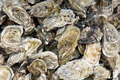 牡蛎养殖关键技术