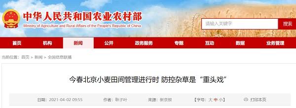 """防除杂草是北京今春麦田管理的""""大事"""""""