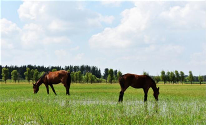 圈养马的无雄饲养和管理