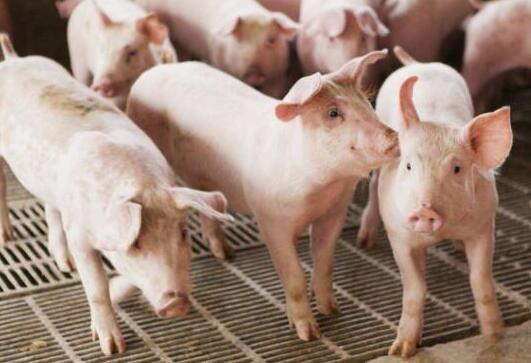"""推动从""""运猪""""到""""运肉""""的转变。全国将开展非洲猪瘟等动物疫病的防控"""