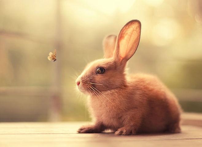 兔瘟的症状及预防措施