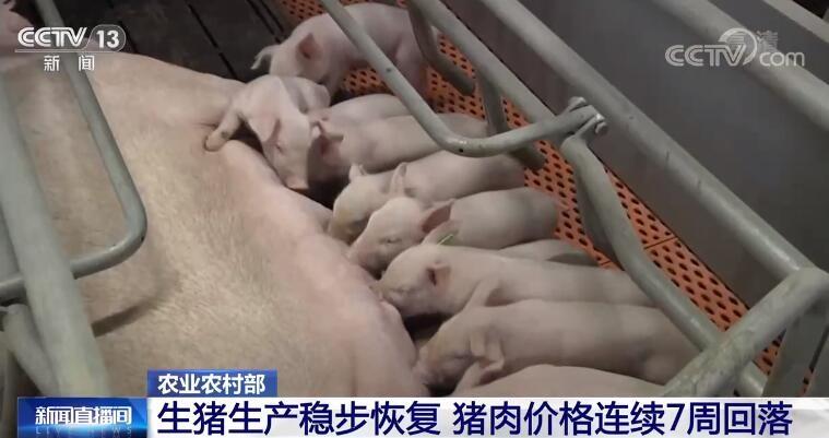 生猪生产稳步回升,全国生猪存栏量保持在4亿头以上