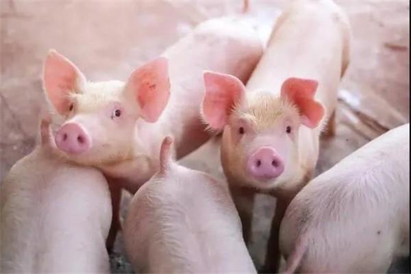 最新!农业部发布:生猪存栏量保持在4亿头以上!