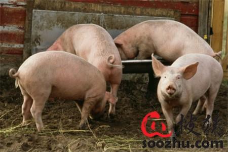 非疫情防控要点?人、车还是猪更重要?