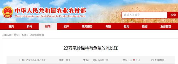 230,000只稀有和特有的鱼苗被放入长江